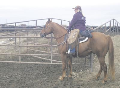 Feed operation rides with highly trained horses