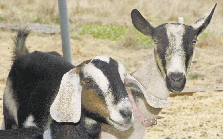 Micro dairies grow into niche
