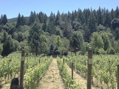 Teutonic Wine Company pushes boundaries in Coast Range