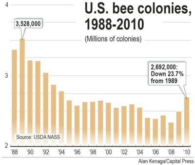 Latest buzz on bee decline: Studies blame pesticides
