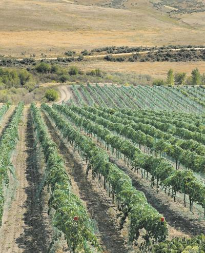 Book tours Idaho wine country