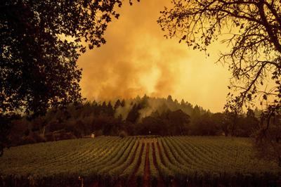 California wildfires vineyard smoke