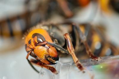 hornet nest recap