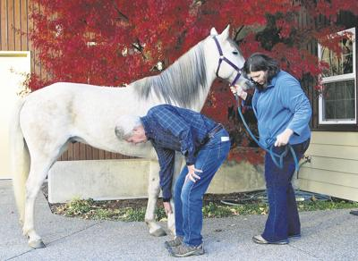 Sides debate reasons for horse slaughter