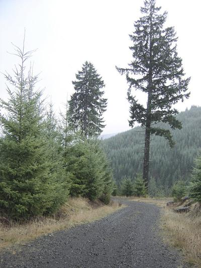 Forest habitat policy to change