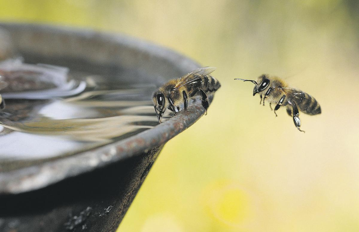 Busy researchers launch bee website
