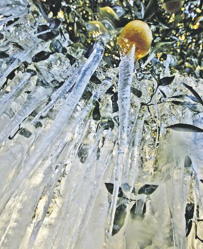 Cold grips Florida ag