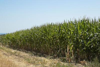 Oregon corn field (copy)