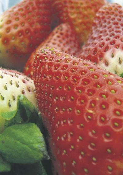 Strawberry production explodes