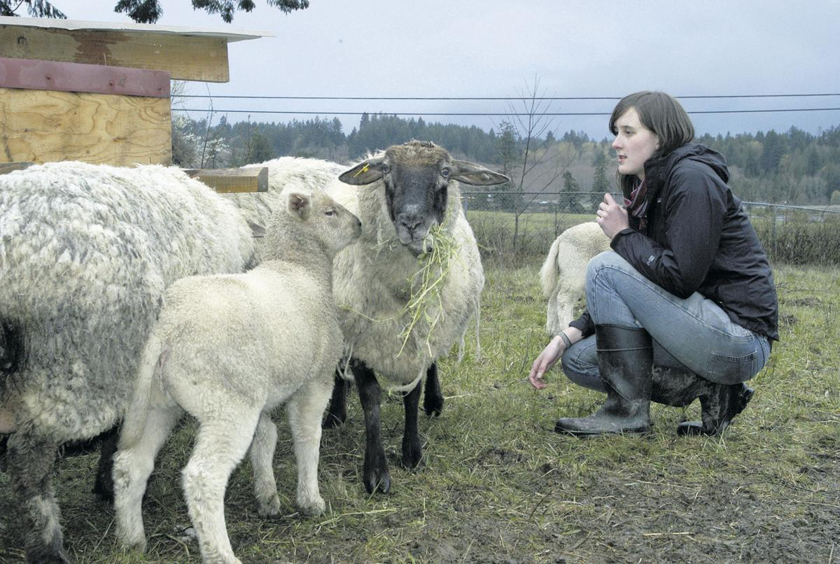 Student sheep club comes to order in pasture