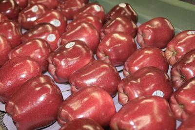Mexico taking more of plentiful Red Delicious crop