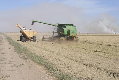 Rice harvest proceeds as production, prices rebound