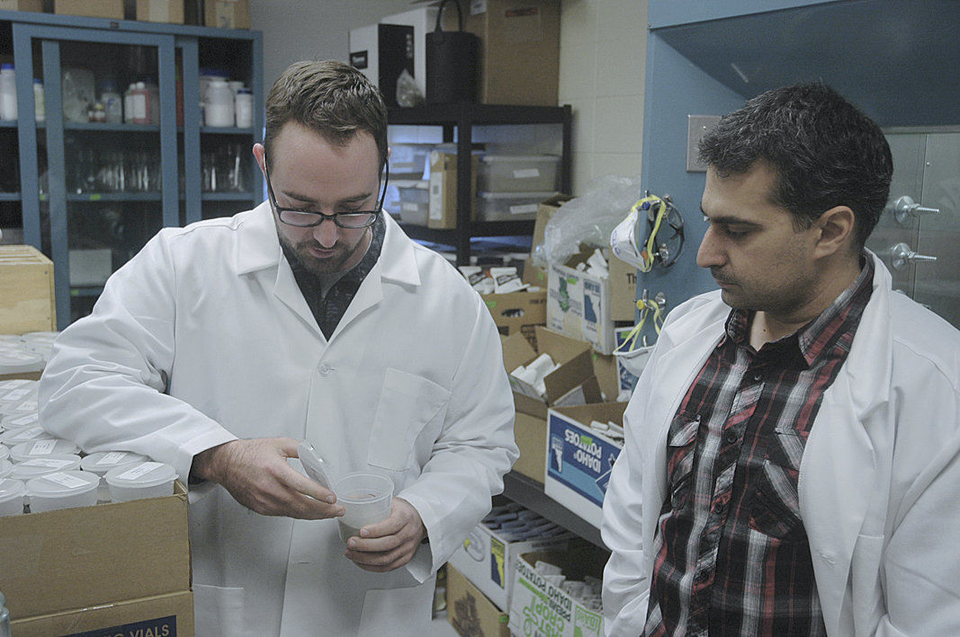 Researchers: Denser soil reduces wireworm pressure