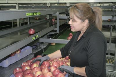 Apple prices increasing, marketers say