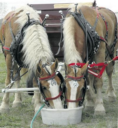 Test your equine knowledge with a quiz