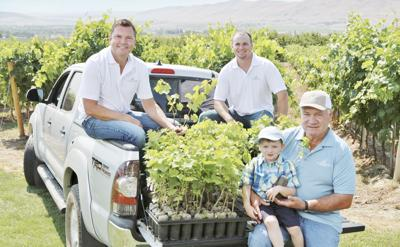 Judkins family dedicated to cultivating clean grapevines