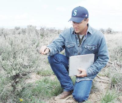 Bunchgrass boost: Seed-amendment technology aiding rangeland perennials