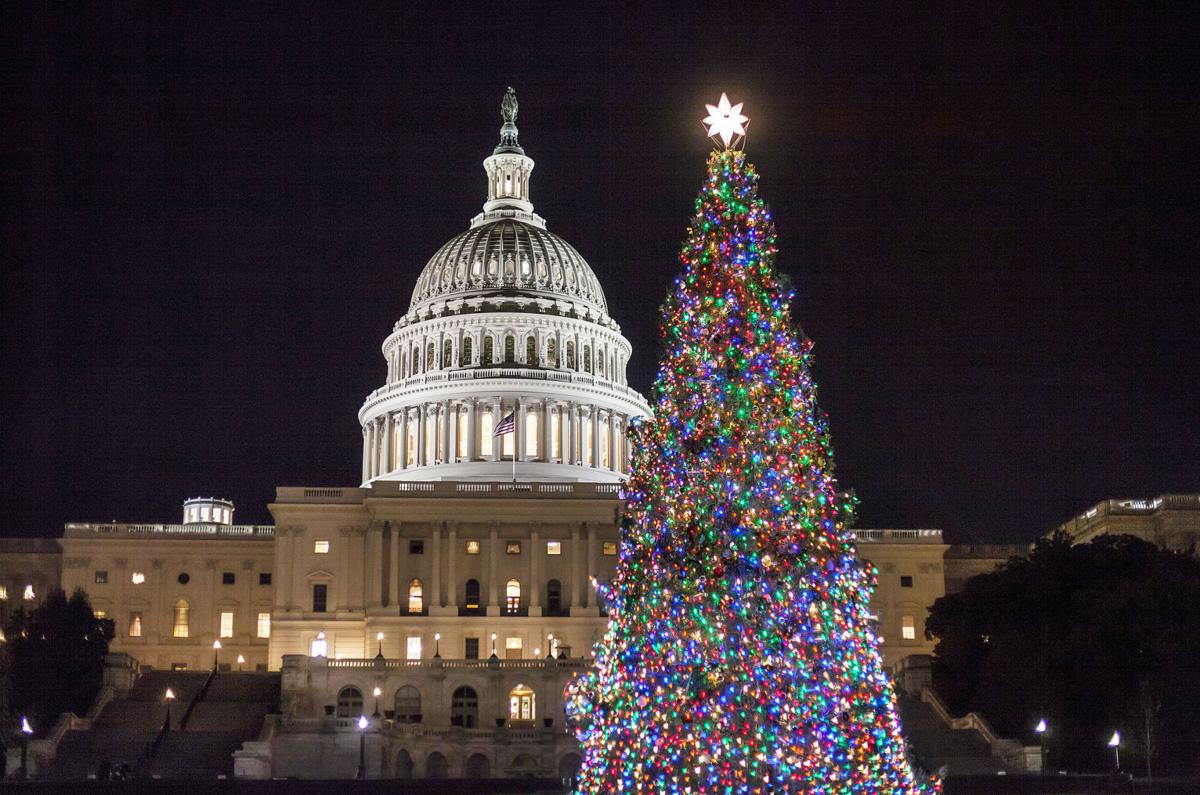 Capitol Christmas Tree.Willamette National Forest To Provide U S Capitol Christmas