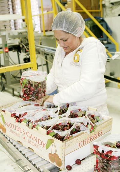 New bags help cherry sales