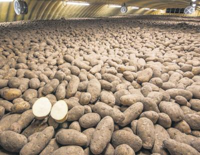 Simplot requests deregulation of new biotech spud varieties