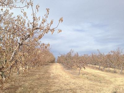 WSDA estimates '15 drought damage topped $700 million