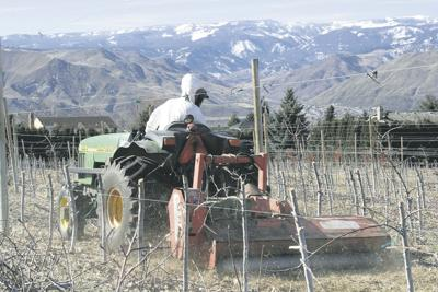 Growers face another cool, wet spring