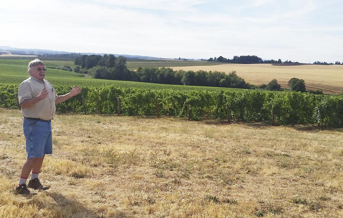 Vineyards need to be 'tucked in' for winter