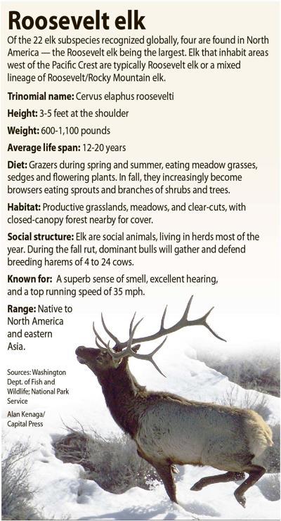 Elk snapshot