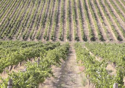Bill designed to protect Idaho's wine industry