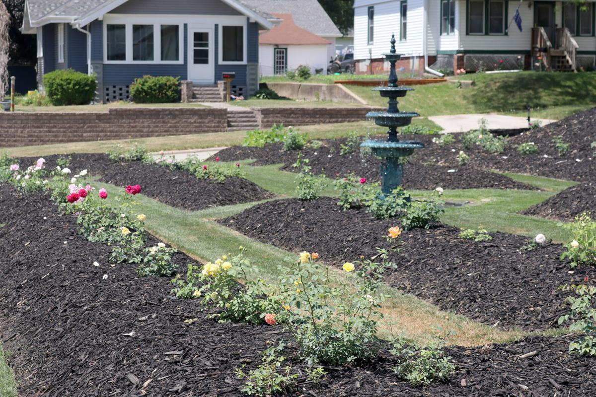 orr rose garden10 21-07-14