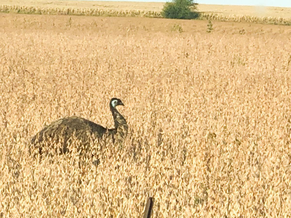 emu greene county 19-10-09