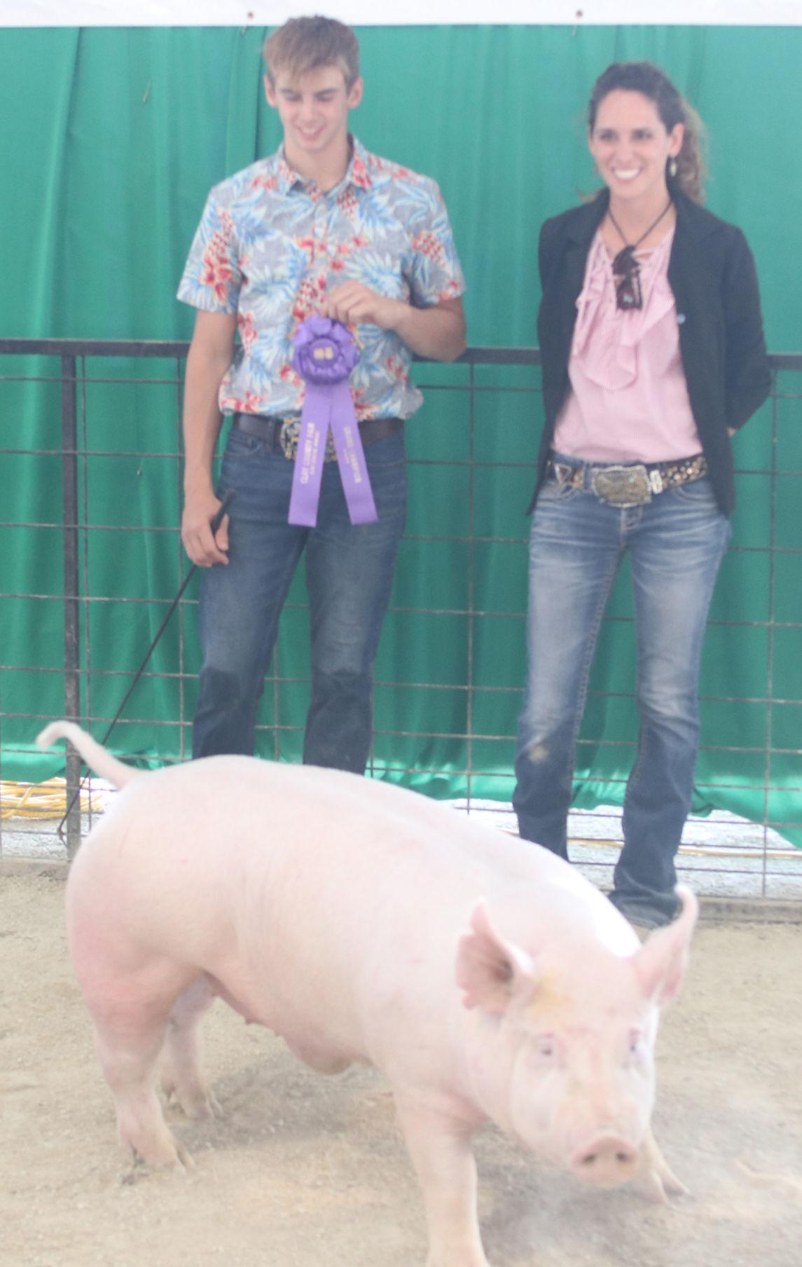 Grand Market Hog