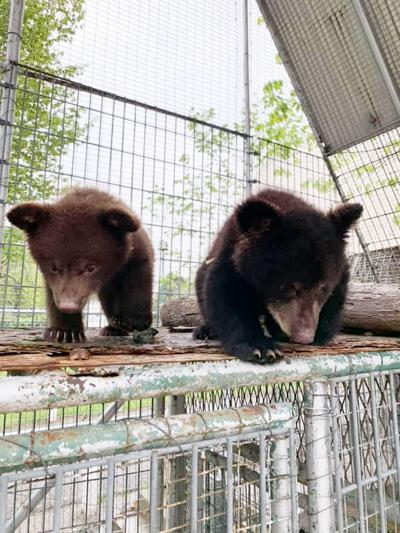 Name those cubs!