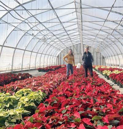 Apple Valley Greenhouse