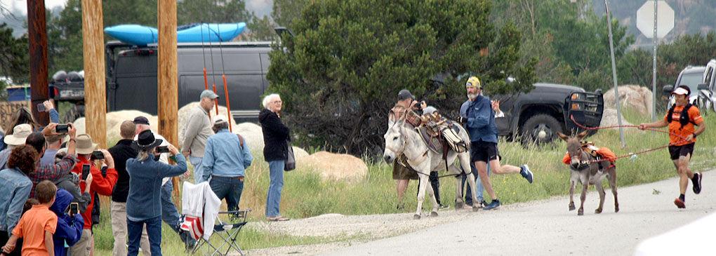 burro veer 1.jpg