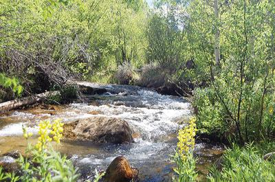 Summer Flows down brown's creek