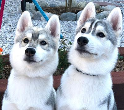 Puppies in training