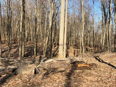 Lake LaDue forested land