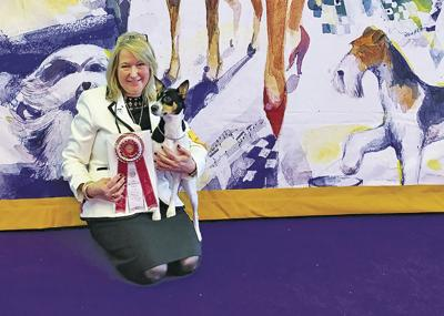 Karen Emerson and her prize-winning rat terrier Cookie.