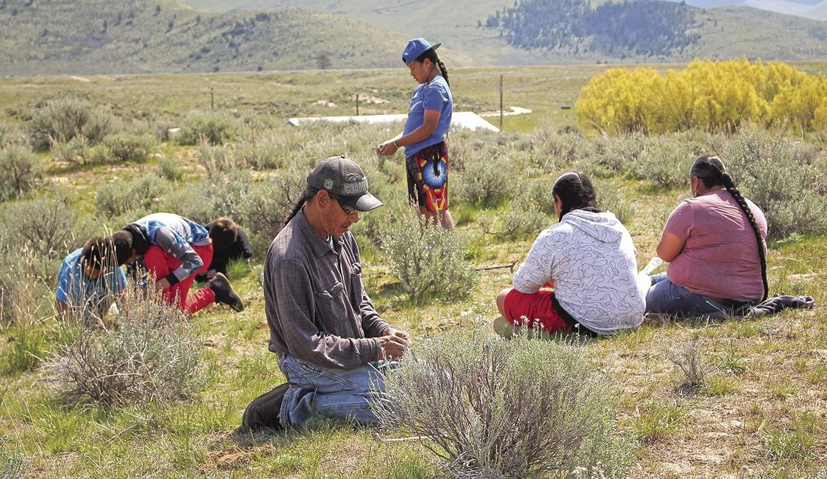 Annual bitterroot dig keeps the tradition alive | News | charkoosta com