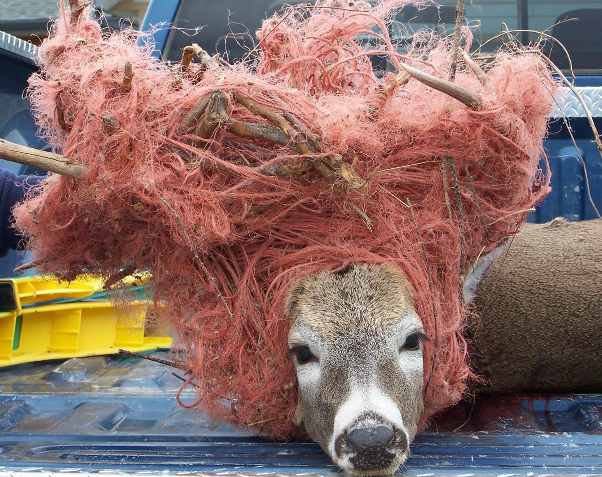 Bailing twine and wildlife don't mix!