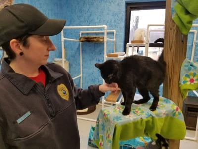 Animal Control facility just purring along
