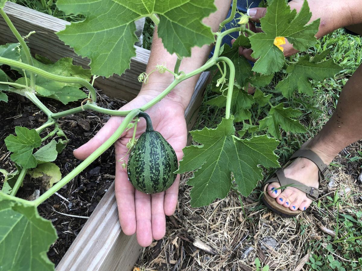 Rogers County Cherokee Association grows community garden for cultural teaching