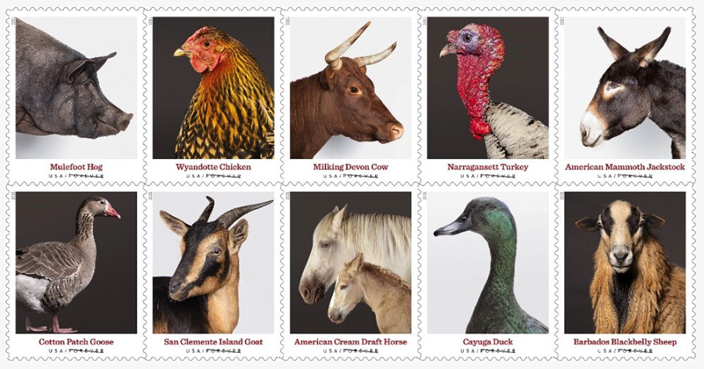 Rare donkey from Cherokee-owned farm immortalized on stamp