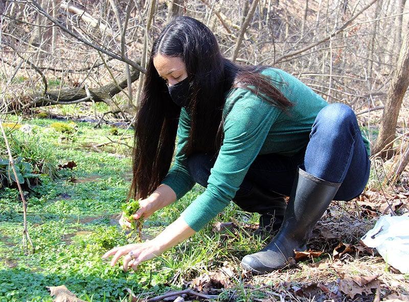 Watercress: nutritional and medicinal super food