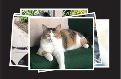 PAWS Chicago hosts Vanity Fur, a pet photo contest.