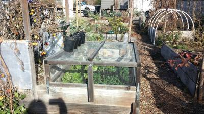 Garden Mind: A beginner gardener wants to eat. Now what?