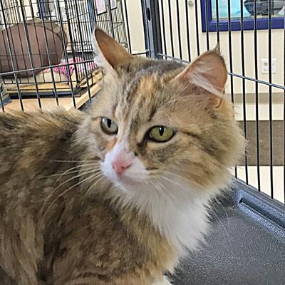 Animal Shelter Report  Blessing of the animals this Saturday