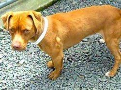 Humane Society Pet Report: 5.12.10