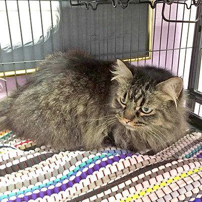 Animal Shelter Report  Loving adult kitties on sale